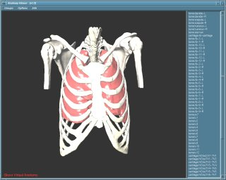 Anatomy Viewer #1