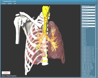Anatomy Viewer #3