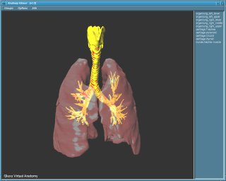 Anatomy Viewer #4